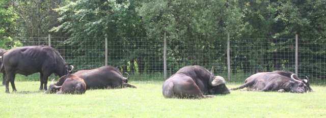 06.22.01 - Knowsley Safari Park