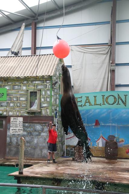 06.22.25 - Sealion show