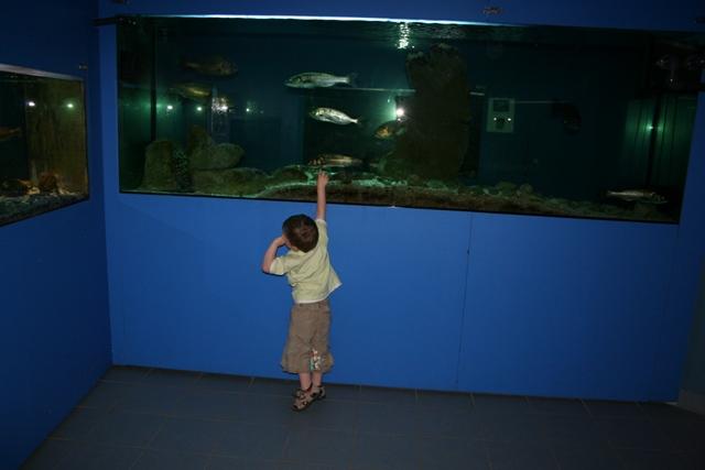 06.17 - Porec.19 - aquarium