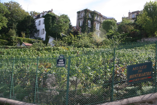 09.08 - 16 - Vineyard in Montmartre