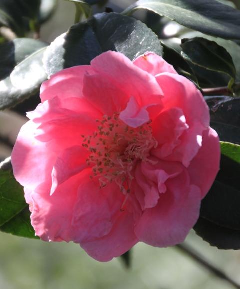 04.13.15 - Ness Gardens