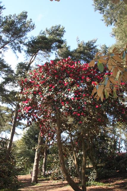 04.13.16 - Ness Gardens