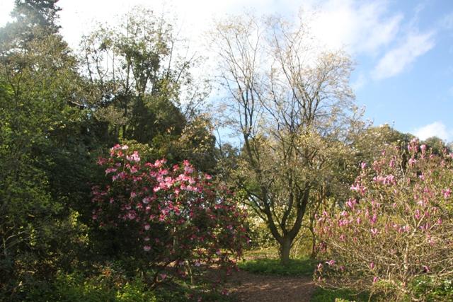 04.13.21 - Ness Gardens