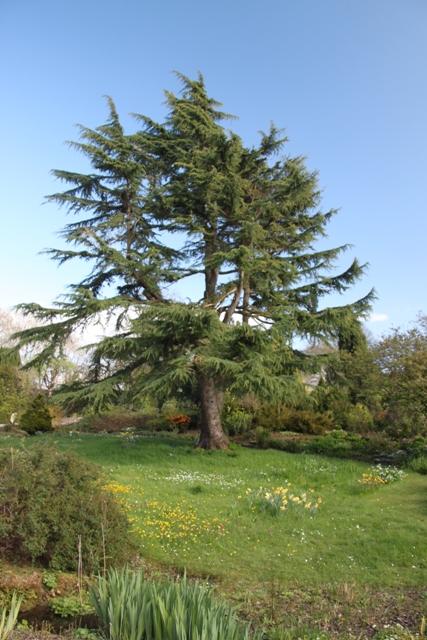 04.13.33 - Ness Gardens