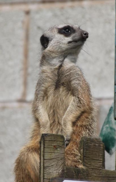 04.21.02 - Bowland Wild Boar Park