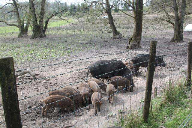 04.21.22 - Bowland Wild Boar Park