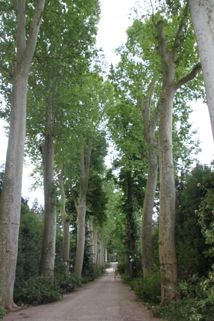 05.30.30 - Boboli Gardens