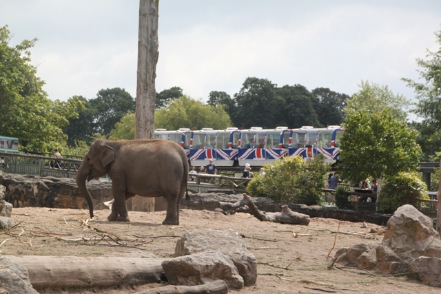 06.21.05 - Chester Zoo