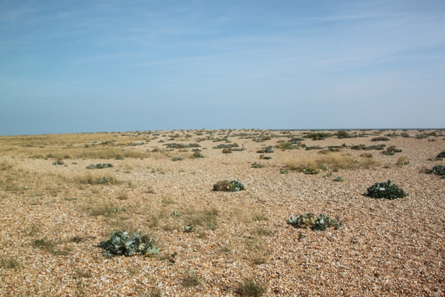 07.31.22 - Dungeness