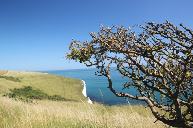 08.01.20 - White Cliffs walk