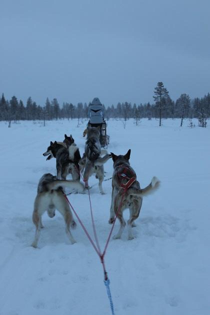 12.19.02 - Husky sledding