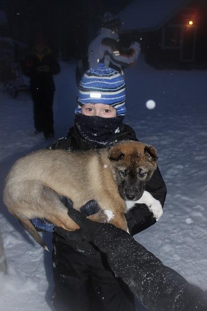 12.19.07 - Husky puppy